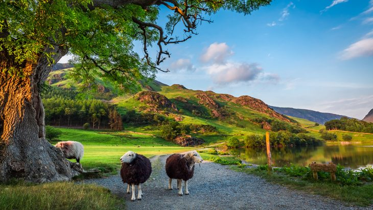 Countryside in the Lake District